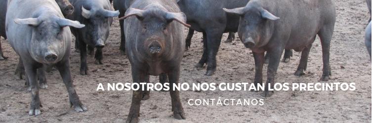Contacta con Precintia (sector alimentario)